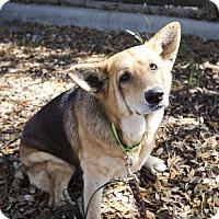 Adopt A Pet :: Dorothy - Houston, TX