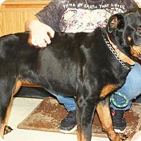 Adopt A Pet :: Persephone - available 4/30 - Sparta, NJ