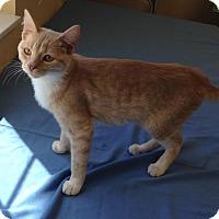 Adopt A Pet :: Bella - Larned, KS
