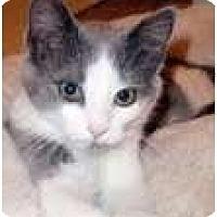 Adopt A Pet :: Mischa - Arlington, VA
