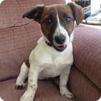 Adopt A Pet :: Diva - South Amboy, NJ