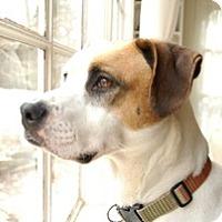 Adopt A Pet :: Otis - Marlton, NJ