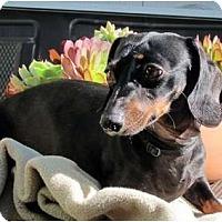 Adopt A Pet :: Lolo - San Jose, CA
