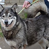 Adopt A Pet :: Gypsy - Hamilton, ON