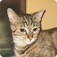 Adopt A Pet :: NOELLE - 2014 - Hamilton, NJ