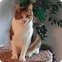 Adopt A Pet :: Katness Eberdeen - Laguna Woods, CA