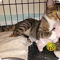 Adopt A Pet :: Nola - Colmar, PA
