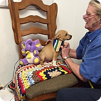 Adopt A Pet :: Abby - Brattleboro, VT