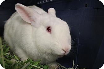 Other/Unknown Mix for adoption in Hazlet, New Jersey - Mink