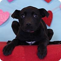 Adopt A Pet :: Jewel II - Waldorf, MD