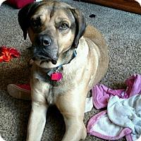 Adopt A Pet :: Duke - Yukon, OK