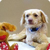 Adopt A Pet :: Sonny - Oakley, CA