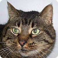 Adopt A Pet :: Emmett - Kalamazoo, MI