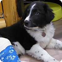 Adopt A Pet :: Chester - Spanish Fork, UT