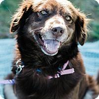 Adopt A Pet :: Macy $125 - Seneca, SC