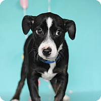 Adopt A Pet :: Zukki - Waldorf, MD