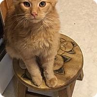 Adopt A Pet :: Noah - Covington, KY