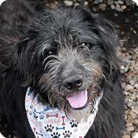 Adopt A Pet :: Dakota-PENDING - Garfield Heights, OH