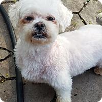Adopt A Pet :: Heidi - Linden, NJ
