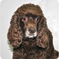Adopt A Pet :: Emma - Port Washington, NY