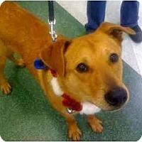 Adopt A Pet :: Bobby - Fowler, CA