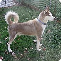 Adopt A Pet :: Connor - Madison, WI