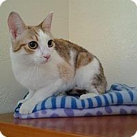 Adopt A Pet :: Ginger - Modesto, CA
