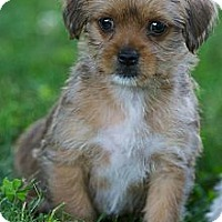 Adopt A Pet :: Chipper - Providence, RI