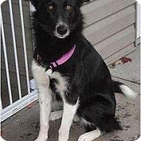 Adopt A Pet :: Taylor - Seattle, WA
