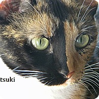 Adopt A Pet :: Itsuki (Suki) - Phoenix, AZ