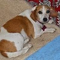 Adopt A Pet :: Beouffy - Rayville, LA