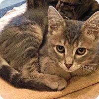 Adopt A Pet :: Lucy - N. Billerica, MA