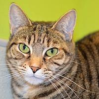 Adopt A Pet :: Annabelle - Westbury, NY