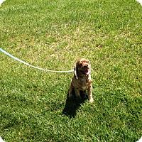 Adopt A Pet :: Jasper -Adopted! - Kannapolis, NC