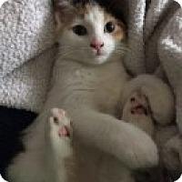 Adopt A Pet :: Tina - McHenry, IL