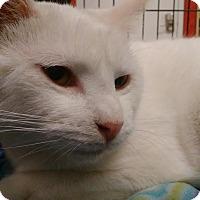 Adopt A Pet :: Jon Luc - Columbus, OH