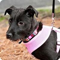 Adopt A Pet :: Fleurette - Alpharetta, GA