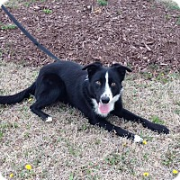 Adopt A Pet :: Jake - Larned, KS