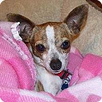 Adopt A Pet :: ROSIE - AUSTIN, TX