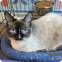Adopt A Pet :: Annabella - Sterling Hgts, MI