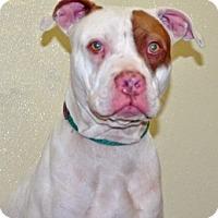 Adopt A Pet :: Winter - Port Washington, NY