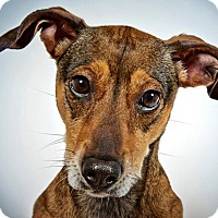 Adopt A Pet :: Kaitlyn - New York, NY
