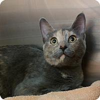 Adopt A Pet :: Baby - Edmonton, AB