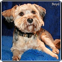Adopt A Pet :: Hamilton NJ - Boyd - New Jersey, NJ
