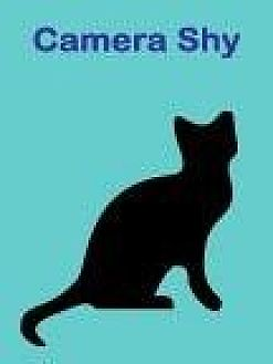 Domestic Shorthair Cat for adoption in Roseville, California - Stormy