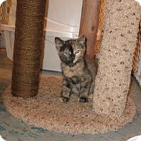 Adopt A Pet :: Rosedapple - Geneseo, IL