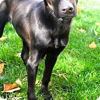 Adopt A Pet :: Ernie - Mt. Prospect, IL