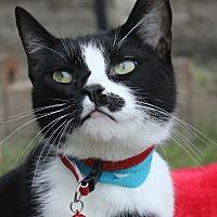 Adopt A Pet :: Meghdad - Ocean Springs, MS
