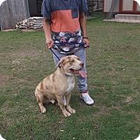 Adopt A Pet :: Clark - San Antonio, TX