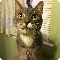 Adopt A Pet :: ULYSSES! - Philadelphia, PA